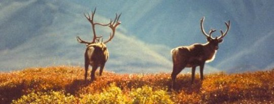 Arctic Tundra Akan Beralih ke Hutan