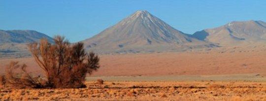 Le désert produit des indices sur la survie des espèces