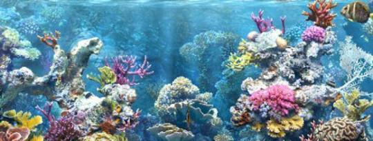 Colocar um guarda-chuva sobre recifes de coral