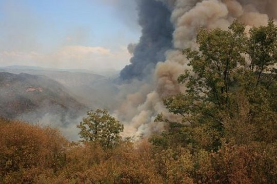 Aumento da temperatura irá estimular as chamas da floresta