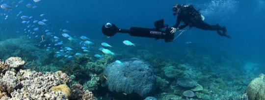 Google A Reef At Help To Save It