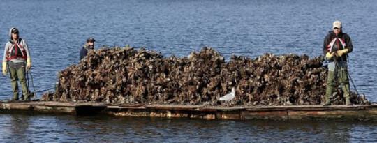 Lautan Asid Mengancam Perniagaan Tiruan Billion-dollar