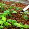 Aquaponics vs Traditional Agriculture
