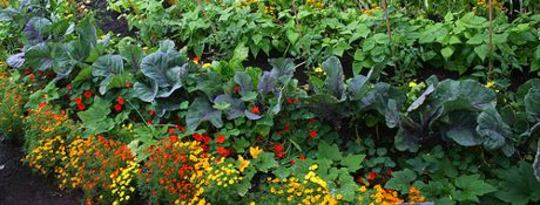 In Partnership with the Earth: 