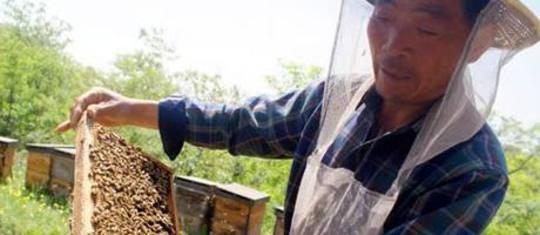Kinesisk honning