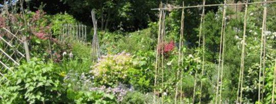 10 पीटर Ladner द्वारा एक समुदाय उद्यान शुरू करने के लिए कदम