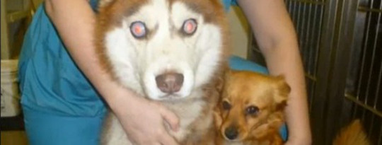 A Blind Dog with his own Seeing Eye Dog?