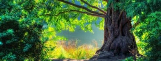 Une économie humaine basée sur la nature: une situation gagnant-gagnant