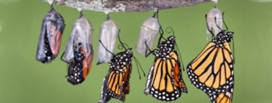 The Power of Metamorphosis: Being a Conscious Co-Creator