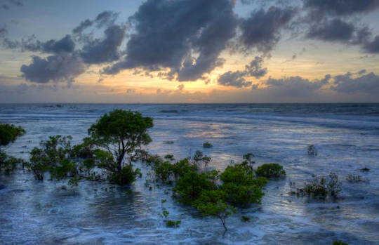 Om vi skyddar vårt hav kan det skydda oss