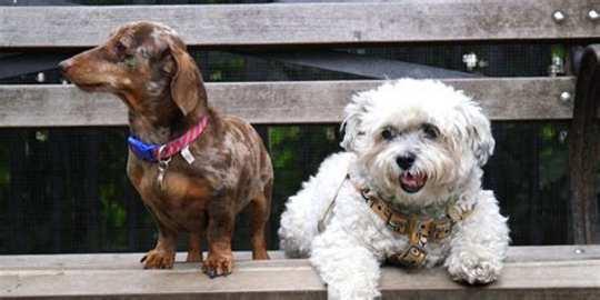 如何與多隻狗生活在一起