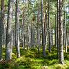 全國植樹節:用樹木繪畫世界