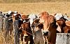 Australiens Bauern wollen mehr Klimaschutz – und sie fangen in ihren eigenen Hinterhöfen an