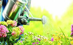 Miksi puutarhanhoito on hyvä mielesi ja kehosi