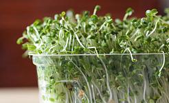 Kan 'n Broccoli Spruitpille Kanker Bestry?