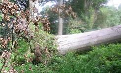 Dacă un copac a căzut în pădure ...