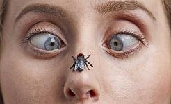 Devo jogar fora o alimento uma vez que uma mosca pousou sobre ele?