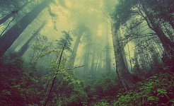 O poder de cura do espaço sagrado, natural ou artificial