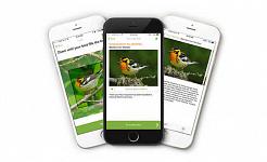 鳥アプリ12 31