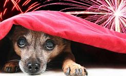 Hogyan érintik valóban a kutyákat a tűzijátékok