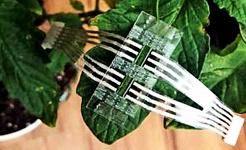सेंसर पैच एक पौधे की पत्ती पर बैठता है