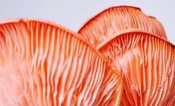 ガンのリスクを下げるには、きのこをもっと食べますか?