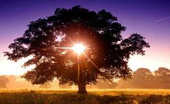 livets träd 11 21