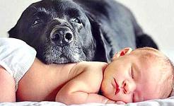 Suy giảm khả năng sinh sản của chó là một cảnh báo môi trường
