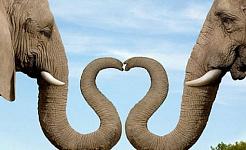 Elefantes e Puppy Love: Animais Ajude-nos a abrir nosso coração