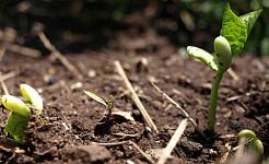 La clave de la jardinería es la suciedad. Si puedes cultivar buena tierra ahora, puedes cultivar buenos vegetales esta primavera. Y no tiene que ir a la tienda de jardinería para cargar cajas y bolsas para hacerlo si comienza temprano y lo considera un proyecto de todo el año.