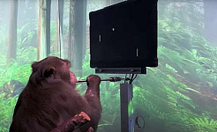 Monkey, Pager Can Play Pong With His Mind