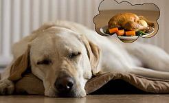 Hunde har 3 gange mere BPA efter at have spist dåse
