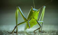 지능있는 동료 존재로서의 곤충과 의사 소통하기