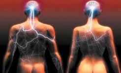 วิทยาศาสตร์แกล้งทำเป็นทั้งสองเพศมีสมองเหมือนกันหรือไม่?