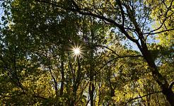 فطرت طب کے دو فارم: سورج کی روشنی اور جنگل غسل