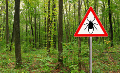 Fact or Fiction: Debunking 4 Common Myths About Ticks
