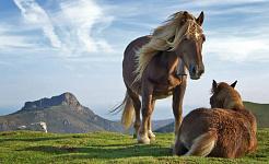 Mitä hevosia opettaa meille