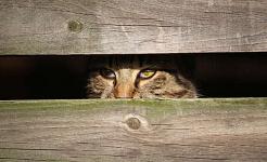 Stresul dvs. vă afectează animalele de companie și pe cei pe care îi iubiți?