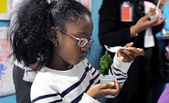 如果孩子長出羽衣甘藍,他們會吃嗎? 美國農業部,CC BY