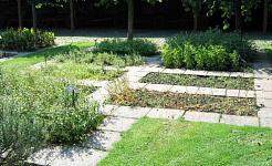 Suplementos de hierbas naturales para las alergias