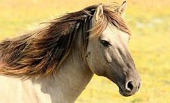 Belajar Tentang Kami Dengan Berkomunikasi dengan Kuda