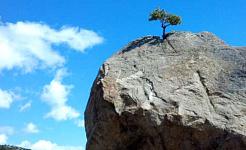 çıplak bir uçurumun tepesinde büyüyen yalnız bir ağaç