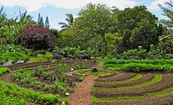 Μια επανάσταση που μεταμφιέζεται ως οργανική κηπουρική