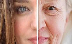 Verengung der Theorie des Alterns