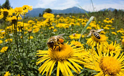 В то время как некоторые пчелы - рабочие и другие, рожденные пчел бесплатно