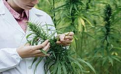 Veroorzaakt cannabis geestelijke ergheden?