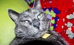 हरी आंखों वाली एक काली बिल्ली लाल और हरे रंग के कंबल पर कैमरे को देखती है