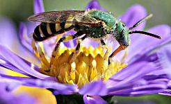 Miért veszítik el a méhek, akkor nemcsak az ízlésünk van