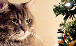 חסכו מחשבה לחברינו הפרוותיים בחג המולד