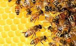 Τι μπορούν να μας διδάξουν τα κοινωνικά έντομα για την ανθεκτική υποδομή
